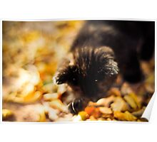 Black Kitten - Autumn Leaves Poster