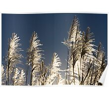 Sugar Cane Fronds Poster