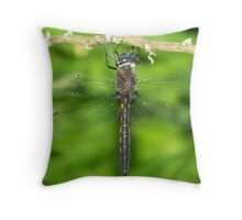 A male Common Baskettail dragonfly. Throw Pillow