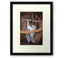 Adorable Tabby Cat Framed Print