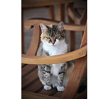 Adorable Tabby Cat Photographic Print