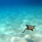 My Little Diving Buddy by Lesley Ortiz