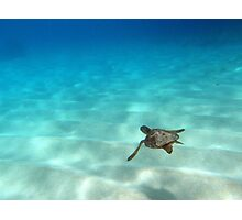 My Little Diving Buddy Photographic Print