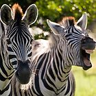 You gotta be kiddin me!! by Explorations Africa Dan MacKenzie