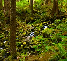Creek on Sol Duc Trail by RavenFalls