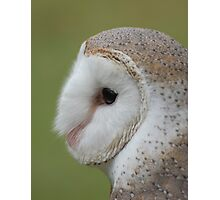 Fluffy face - barn owl profile Photographic Print