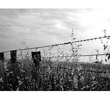 Cornishtown Fenceline, Rutherglen, Australia Photographic Print