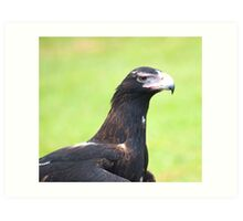 Grumpy face - wedge tailed eagle Art Print