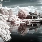 The world in Infrared by David Gray