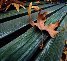 Autumn Leaf by berndt2