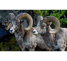 Big Horn Rams    #5827 Photographic Print