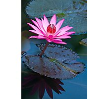Reflections - pink waterlilly  Photographic Print