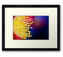 Macro Flower 3 Framed Print
