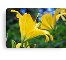 Yellow liles with bokeh Canvas Print