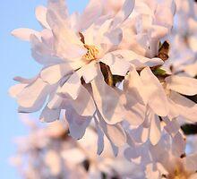 Blossom Reflections - Whetstone, UK by Vanessa  Warren