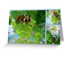 Bee Beetle * Trichius rosaceus  Greeting Card