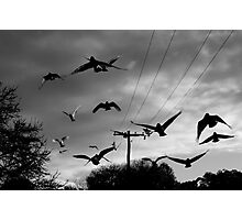 flock Photographic Print
