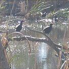 Kaniva Wetlands by Debbie  Jones