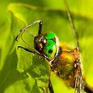 Green Eyes by Robert Abraham