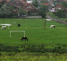 Horses love football too, Romania by Antanas