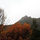 Beech trees at cradle mountain by Carol  Lewsley