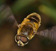 Insect Macro by Gareth Jones
