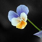 Mosaic Viola by naturevine