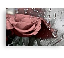 Silver rose. by Brown Sugar. Guns N Roses - Knocking On Heaven's Door . Views (907) . Favs (6). Thanks !!! FEATURED in Safe-haven group. Canvas Print
