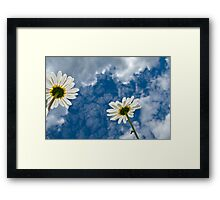 Daisies and Sky Framed Print