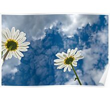 Daisies and Sky Poster