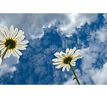 Daisies and Sky Photographic Print