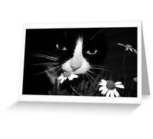 miss daisy Greeting Card