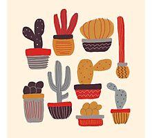 Kaktus Photographic Print