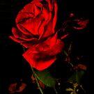 The Night Rose by JamesHarmon