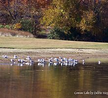 Birds at Cowan Lake by Debbie Meyers