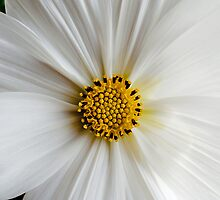 Flora macro by KirksCaptures
