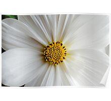 Flora macro Poster