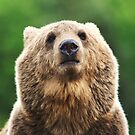 Grizzly portrait by Alan Mattison
