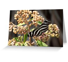 formal flutterware Greeting Card