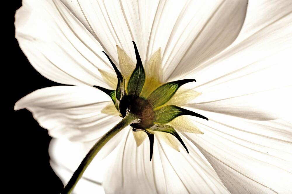 Floral Lamp by KirksCaptures