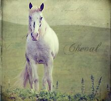 Cheval by Laura Palazzolo
