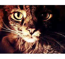 Silly Whiskers Photographic Print