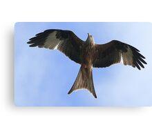 Flight Of The Kite Canvas Print