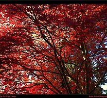 11748 Red Maple Canopy by Robert Breisch