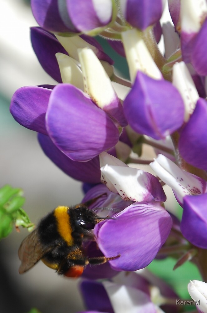 Bee on Blue Lupin by Karen Martin