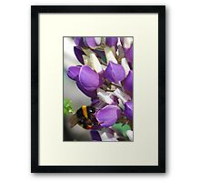 Bee on Blue Lupin Framed Print
