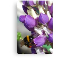 Bee on Blue Lupin Canvas Print
