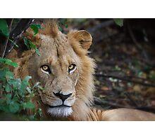 Lion Eyes Photographic Print