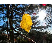 Last autumn leaf Photographic Print