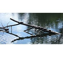 Turtles at All Sports Park Photographic Print